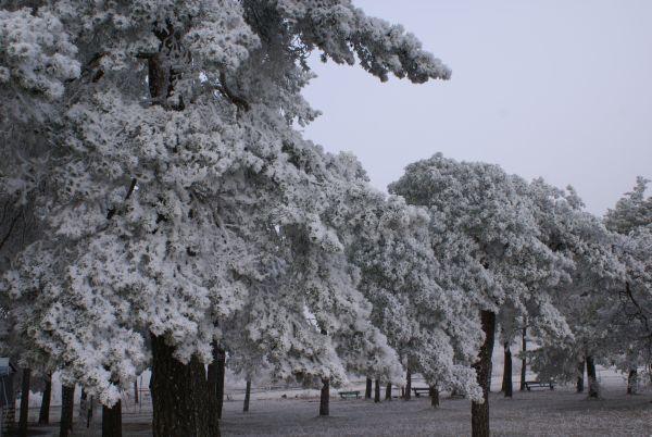 Reifbäume 2016 k